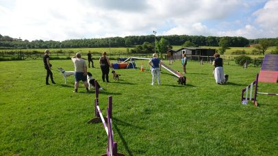 Agility Class at Golden Valley, Ripley.